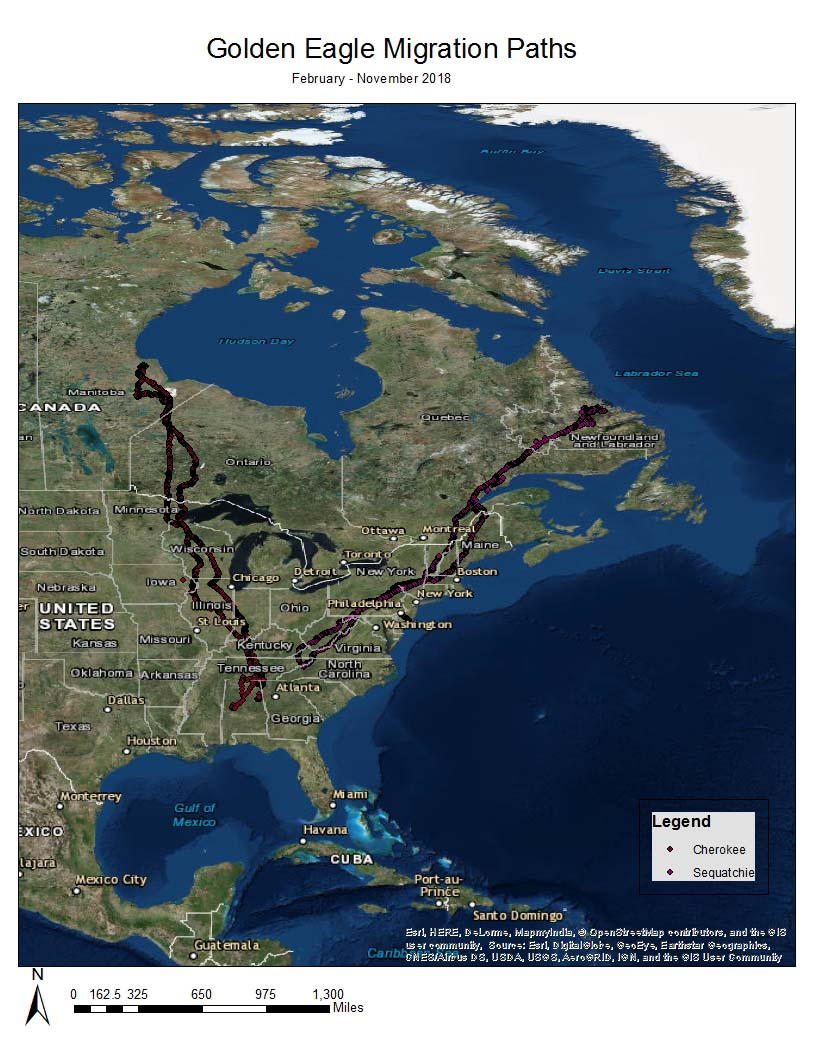2018 Golden Eagle Migration Paths