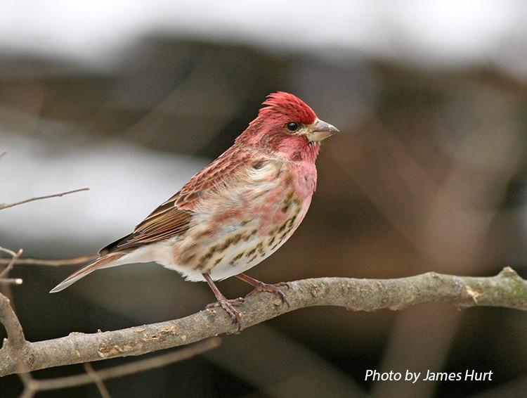 Birding Trails - Tennessee Wildlife Resource Agency ...