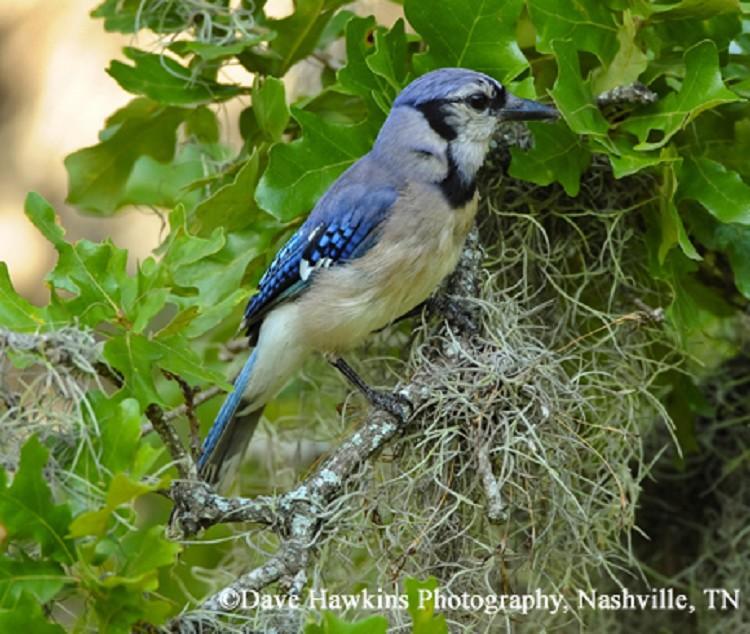 c8161d01d0c Birding Trails - Tennessee Wildlife Resource Agency