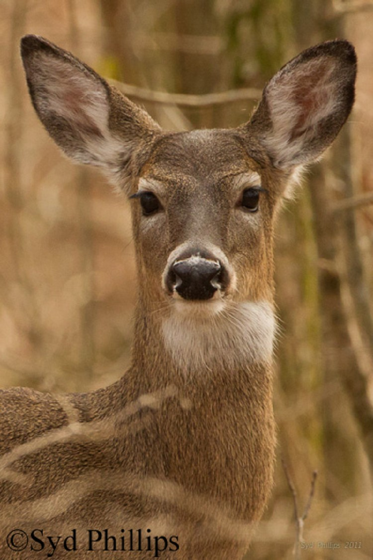 Wide open | Middle of the day and this whitetail buck was ... |Wide Deer Wildlife